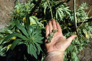 Курение марихуаны негативно влияет на химические процессы мозга