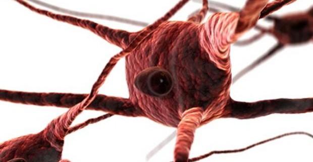 Ученые открыли человеческие нейроны, связанные с ориентацией в окружающем пространстве