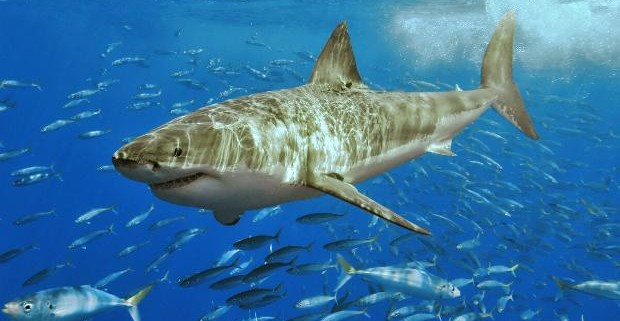 Учеными найдено генетическое сходство человека и акулы
