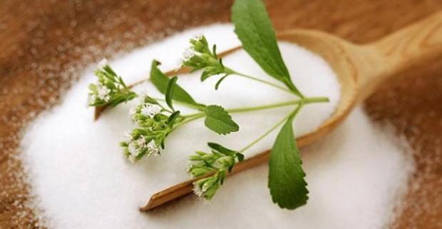 Стевия: растение слаще сахара