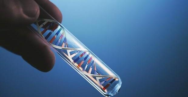 Доказано, что для развития мышечной дистрофии нужны энзимы