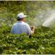 Распыление пестицидов может привести к распространению норовируса