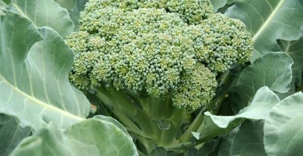Учеными назван овощ, препятствующий раку кожи