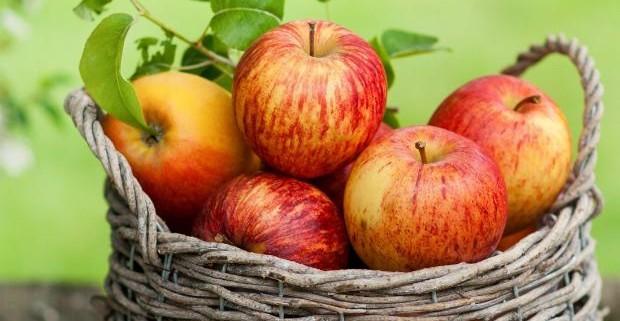 Полезность яблок удивила даже ученых