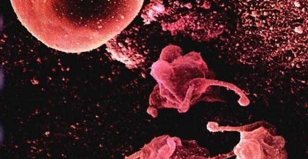 Что такое микоплазма: «хорошая» она или «плохая»?
