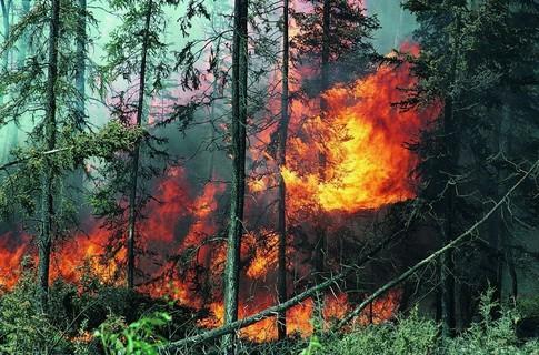 Как сохранить здоровье в сезон пожаров