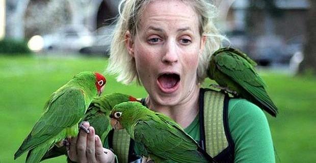 Орнитоз – опасная «птичья» инфекция!