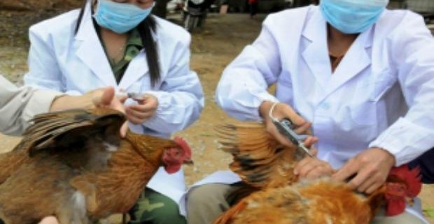 Китайскими учеными разработана вакцина против гриппа H7N9