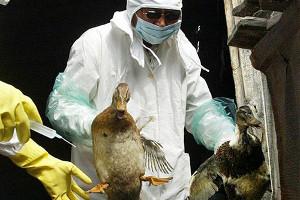 От нового птичьего гриппа ежегодно умирает 1 пациент из 3