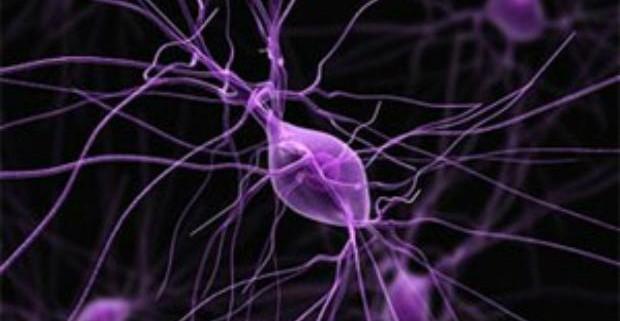 Ученые заявили, что нервные клетки можно восстановить