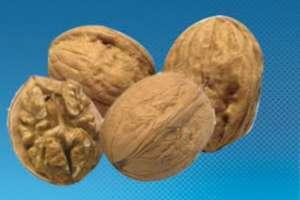 Грецкие орехи — ключ к долголетию
