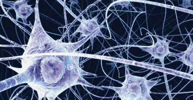 Нейронный шум облегчает процесс обучения