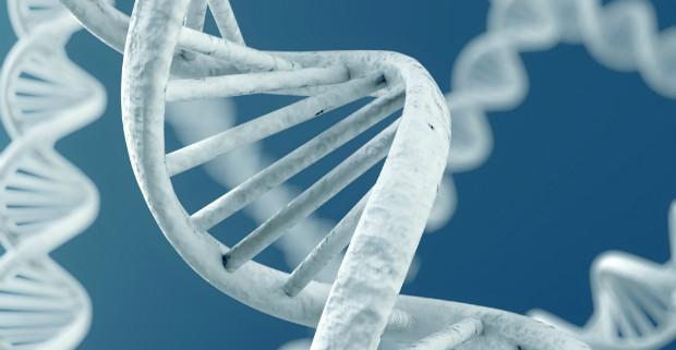 Часть генов людей унаследована от вирусов и грибов