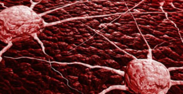 Медиками обнаружен «выключатель роста» у раковых клеток