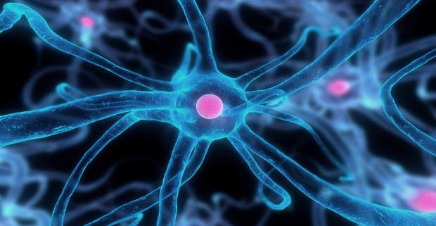 Ученым удалось восстановить поврежденные клетки мозга