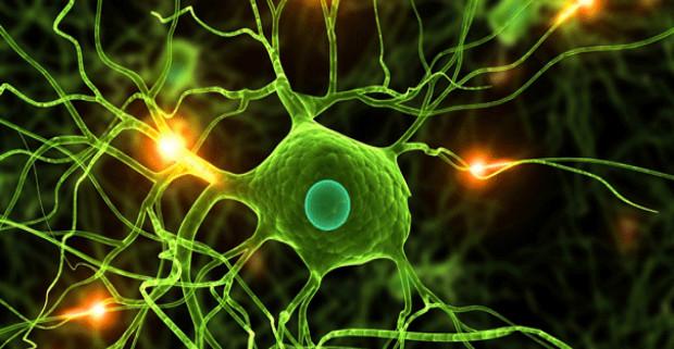 Японским ученым удалось получить нервные клетки из кожи человека
