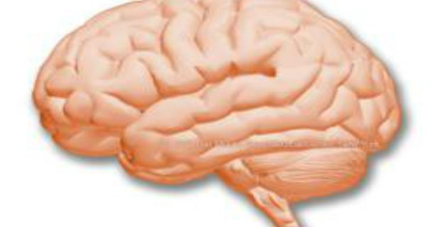 metabolism and brain