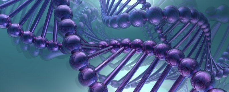 ген молодости