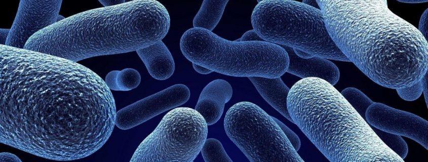 новые бактерии угроза человечеству