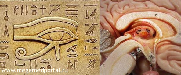 Шишковидная железа третий глаз