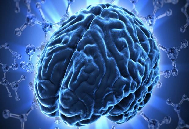Человеческий мозг - возможности и способности