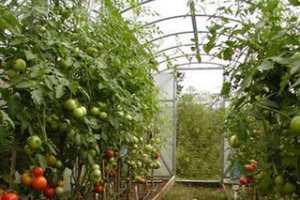 Насколько опасны весенние растительные витамины?