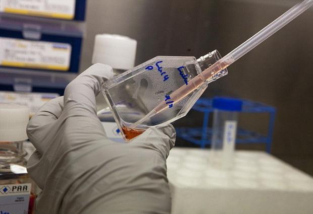 Стволовые клетки слизистой десен могут сыграть важную роль в будущем медицины