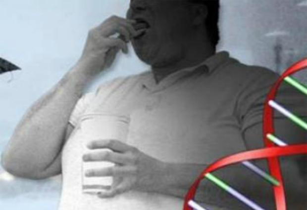 Учеными обнаружен новый главный ген ожирения