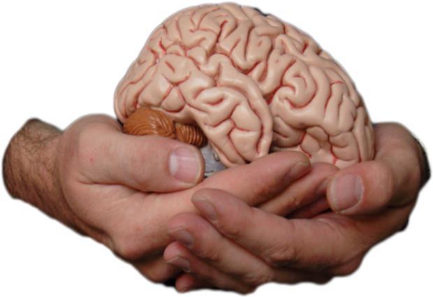 Древние вирусы сделали мозг  человека умнее, выяснили ученые