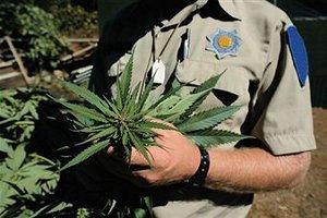 Начало легализации наркотических средств
