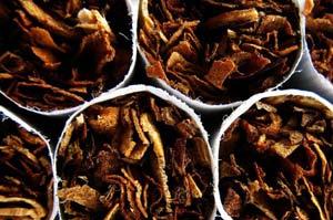 Табак способен победить рак