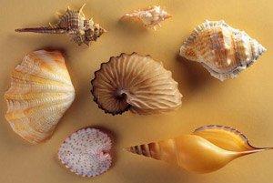 Морские моллюски помогут спасти человечество от рака